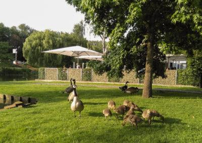 La terrasse et la faune