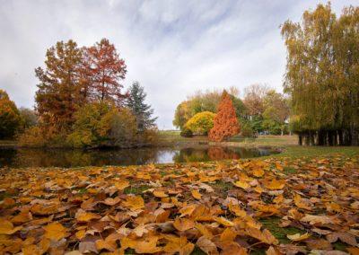 l'etang en automne