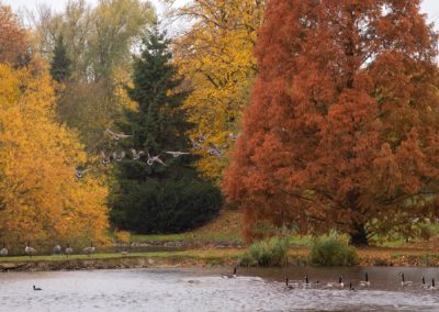 la faune en automne